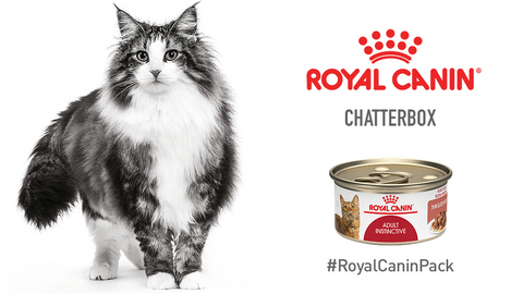 ROYAL CANIN® Chatterbox